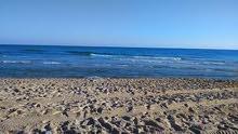 ارض فضاء مساحتها 4هكتارات و2000م على البحر مباشرة بواجهه 70م بسيدي بنور للبيع