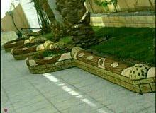 زراعة وديكور حدائق