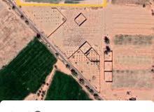مزرعه للبيع مساحتها تقريبآ  15 هكتار،