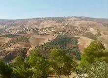 مزرعة مميزة في شرق محافظة جرش/الكفير   - للبيع