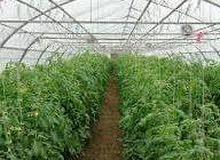 شركة الامل للاستثمار الزراعي