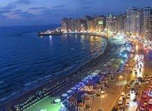 الاسكندريه سيدى بشر شارع محمد نجيب بحرى