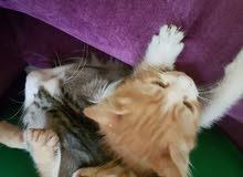 little kitten in need of home