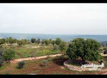 مزرعه 15 دنم مقام عليها مباني بمساحه 800 متر مربع منها فيلا فاخرة وملحقات في اربد-ملكا