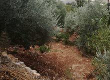 مزرعة للبيع في عجلون / كفرنجة