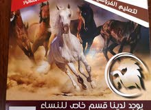 خيل عربية انكليزي شعبية