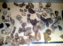 انواع الحجار