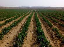 للبيع قطعه ارض زراعيه واستثماريه متكامله الخدمات وبالقرب من الطريق الرئيسي