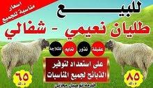 يوجد لدينا أغنام  مع التوصيل مجانا  جميع مناطق الكويت