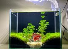 Aquarium with fish & all accessories