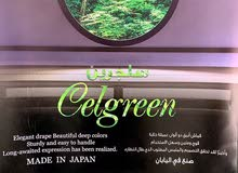 الغابه الخضراء