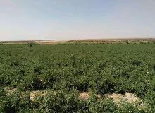 للجادين فقط ورجال الأعمال مزرعه 10 فدان للبيع مسجله وكامله المرافق والخدمات