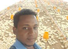سوداني عملت بالزراعه والتجاره وتصنيع الدواجن وغيرها مستعد لاي عمل بإذن الله