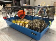 New Hamster cage with 2 little Syrian hamsters for sale