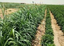 اراضى زراعية للبيع مقدمة من شركه الامل للاستثمار الزراعى