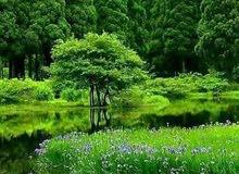 خدمة حداق وبيع جميع لأنواع الأشجار وتنصيق لحداق