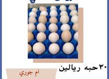 بيض عماني 30حبه ريالين و15حبه ريال