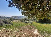 جرش شمال قرية عصفور مقابل غابة زين