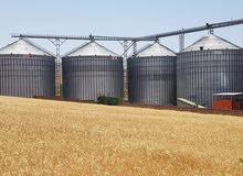 بحث عن عمل فى مجال طحن الحبوب مهندس انتاج وجودة