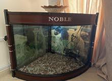 حوض سمك (fish tank)