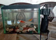 حوض سمك مع احجارو و3 سمكات وفلتر