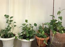 نباتات عضويا زهرة الاوركيد