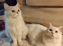 Hey Cat lovers