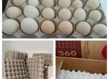 اطباق البيض سلال لنقل