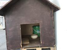 بيت كلب خشبي بسعر طري