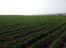 قطعة أرض على طريق المطار منطقة اللبن ، مارس زيدان قرب جامعة الاسراء للبيع