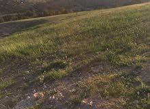 للبيع قطعة ارض في شفا بدران زينات الربوع حوض المكمان