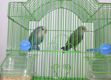 Love birds with cage