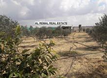 دلم واجهة 42 مسور ومشجر للبيع والبدل -الوسطى قرب صلاح الدين
