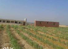 الان استلم مزرعه 15 فدان مسجله ري نيلي مستصلحه بالكامل وجاهزه للزراعه بها كافه ا