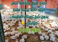 دجاج للبيع ولاية صحار منطقة الوقيبة