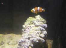 سمكة بحرية