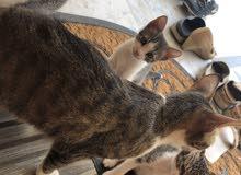 قطة مع طفلها للتبني