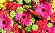 Flower And Indoor Plants Dubai  UAE