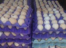 بيض محلي الكميه مفتوحه