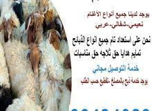 قصاب@الكويت