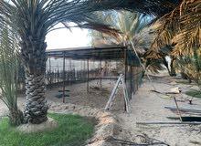 مكان للإيجار دبي لتربية الدواجن - بط - طيور الزينة
