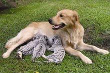 مدرب كلاب فى ابو ظبى