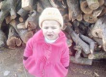 نزيه ملكاوي لبيع الحطب وقص جميع الاشجار