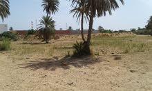 أرض للبيع بجزيرة جربة المنطقة السياحية