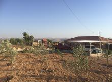 مزرعة-شاليه   6 دونم مع فيلا للبيع  في مادبا - لب