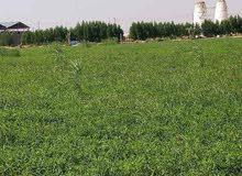 لهواة التميز والجو الريفي مزرعة لقطة للبيع