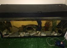 للبيع حوض سمك كامممل مع السمك