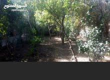 بيع أو مراوس قطعة بستان وفيها دار سكن مساحتها 600 متر