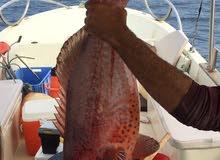 قارب بوت رحلات بحريه والاستمتاع بالبحر صيد سمك بجده