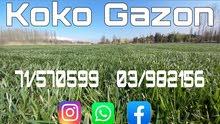 Koko Gazon